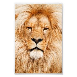 Proud Lion Portrait Photo Print