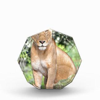 Proud Lioness Award