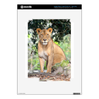 Proud Lioness iPad 3 Decal