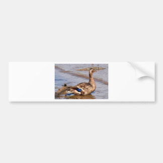 Proud Mother Mallard Bumper Sticker