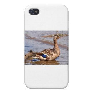 Proud Mother Mallard iPhone 4/4S Case