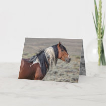 Proud Painted Stallion Wild Horse Greeting Card