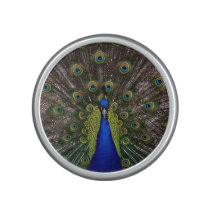 Proud Peacock bluetooth speaker