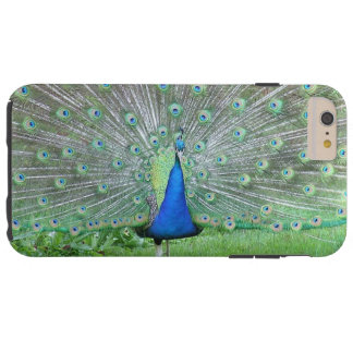 """""""PROUD PEACOCK"""" CASE FOR iPHONE 6"""