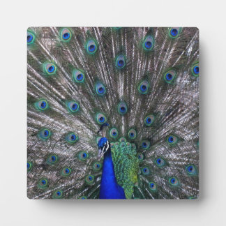 Proud Peacock Photo Easel Plaque