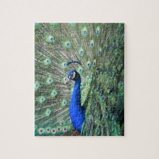 Proud Peacock Puzzle