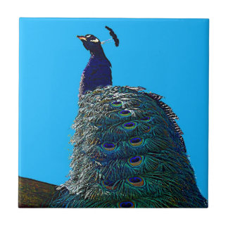 Proud Peacock Small Square Tile