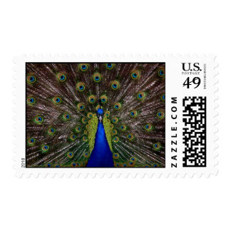 Proud Peacock Stamps