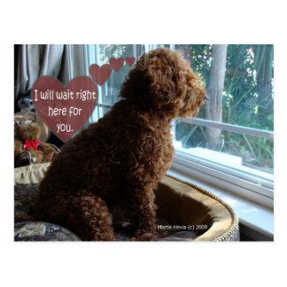 Proud Poodle - Missing You - Postcard