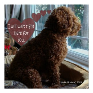 Proud Poodle - Missing You - Poster print