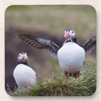 Proud Puffin Beverage Coaster
