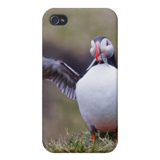 Proud Puffin iPhone 4 Cases