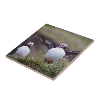 Proud Puffin Small Square Tile