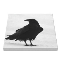 Proud Raven Canvas Print