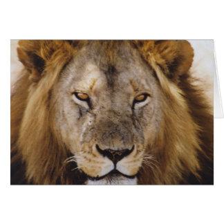 Proud Simba - Serengeti Card