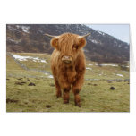 Proud to be Scottish! Greeting Cards