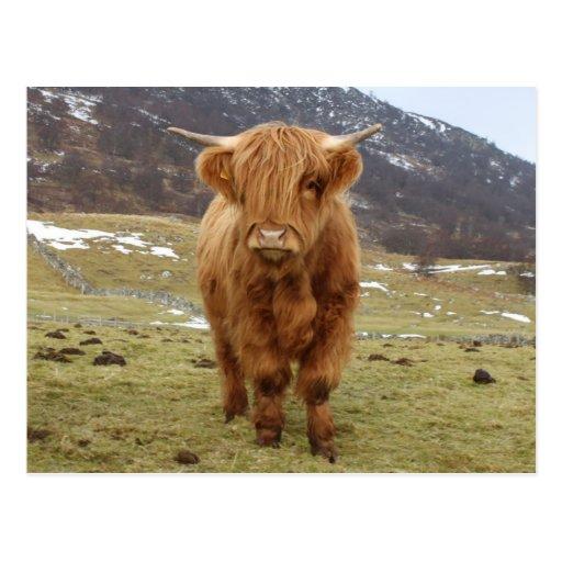Proud to be Scottish! Postcard