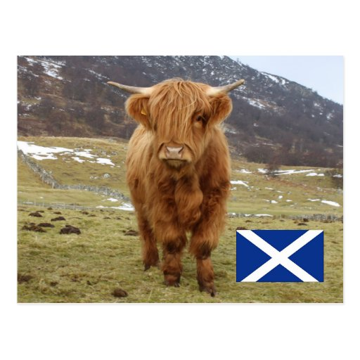 Proud to be Scottish! Postcard