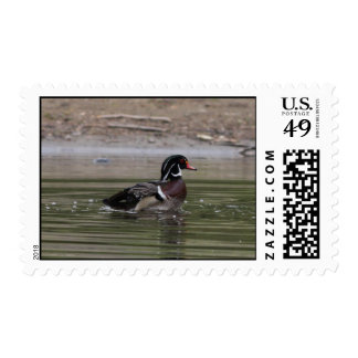 Proud Wood Duck Postage Stamps