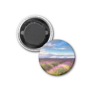 Provence - Lavender fields magnet
