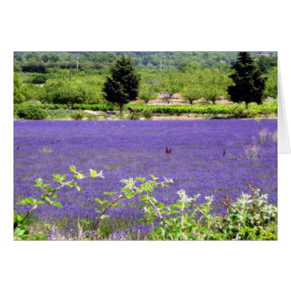 Provencial Lavender, S Cyr Card