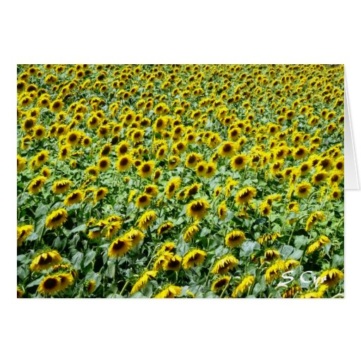Provencial Sunflowers Cards