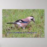 Proverbio griego del pájaro poster