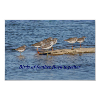 Proverbio inglés del pájaro poster