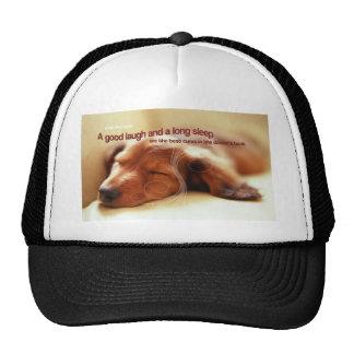 Proverbio irlandés y perro el dormir gorras