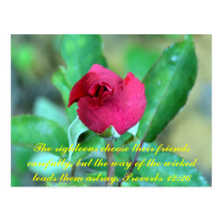 Proverbs 12:26 postcard