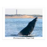 Provincetown - Cape Cod postcard