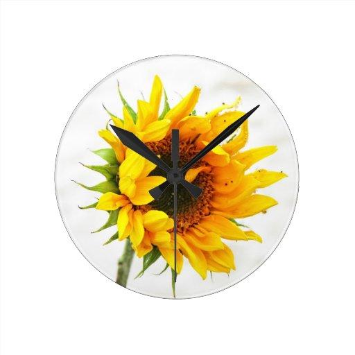 Provincetown Sunflower Round Wall Clocks