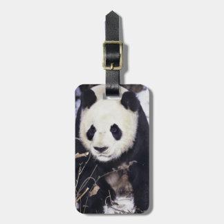 Provincia de Asia, China, Sichuan. Panda gigante e Etiquetas Bolsas