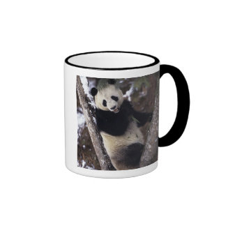 Provincia de Asia China Sichuan Panda gigante e Tazas