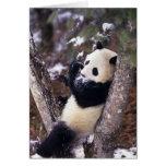 Provincia de Asia, China, Sichuan. Panda gigante p Tarjetón