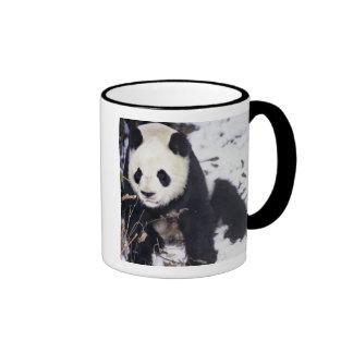 Provincia de Asia, China, Sichuan. Panda gigante Taza De Dos Colores