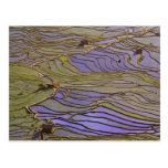 Provincia de Asia, China, Yunnan, Yuanyang. Inunda Postales