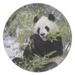 Provincia de China, Sichuan. Alimentaciones de la  Plato De Comida