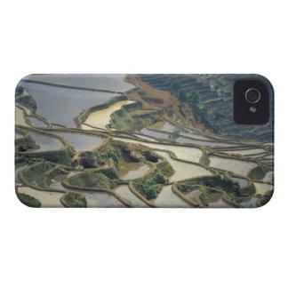 Provincia de China, Yunnan. Terrazas inundadas del iPhone 4 Case-Mate Cárcasa
