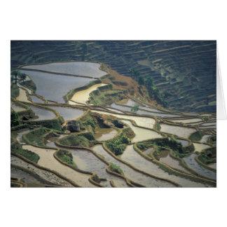 Provincia de China, Yunnan. Terrazas inundadas del Tarjeta