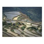 Provincia de China, Yunnan. Terrazas inundadas del Tarjeta Postal