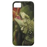 Provincia de Western Cape de la iguana, Suráfrica iPhone 5 Case-Mate Fundas