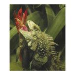 Provincia de Western Cape de la iguana, Suráfrica Lona Envuelta Para Galerias