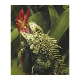 Provincia de Western Cape de la iguana Suráfrica Lona Envuelta Para Galerias