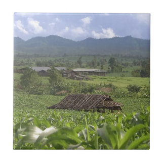 Provincia de Yunnan verde de la fotografía del Azulejo Cuadrado Pequeño