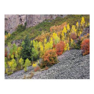 Provo River and aspen trees 10 Postcard