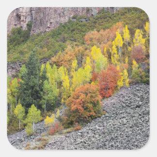 Provo River and aspen trees 10 Square Sticker