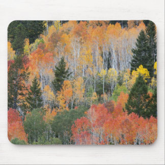 Provo River and aspen trees 11 Mouse Pads