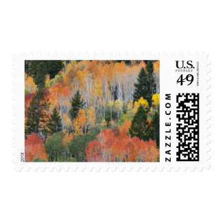 Provo River and aspen trees 11 Stamp