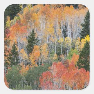Provo River and aspen trees 11 Sticker